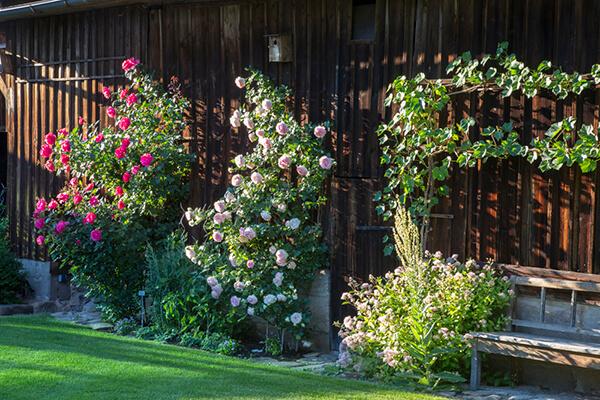 Dach- und Fassadenbegrünung – ein Naturkleid für Ihr Haus.
